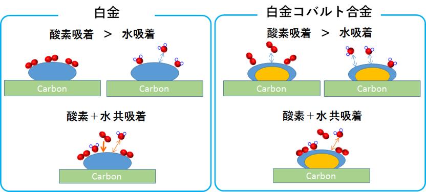 白金と白金コバルト合金における水吸着、酸素+水共吸着の模式図