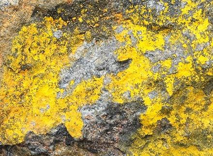 顕微鏡下で撮影 硫カドミウム鉱 -チェコ、カタリナ産